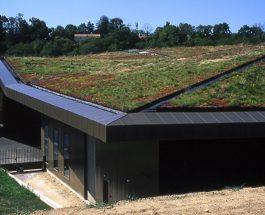 Zielonym do góry- czyli żywe dachy